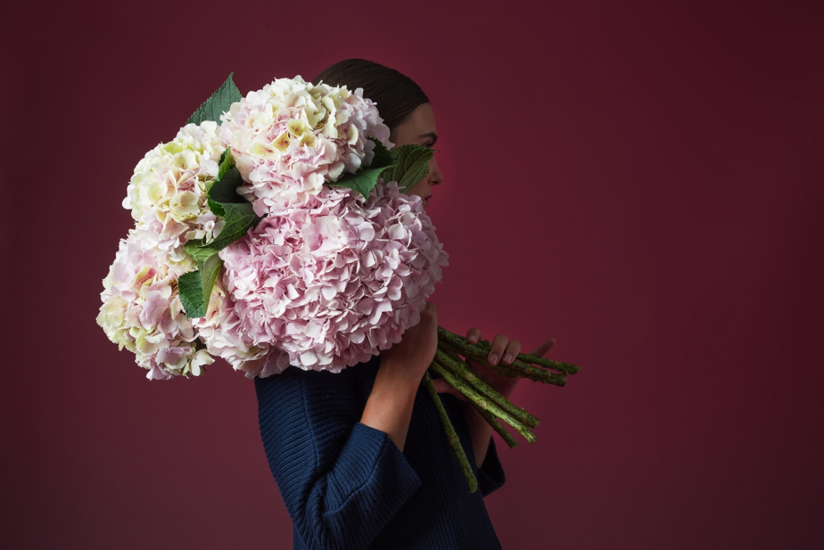 La hortensia, la flor preferida | Universos minimil